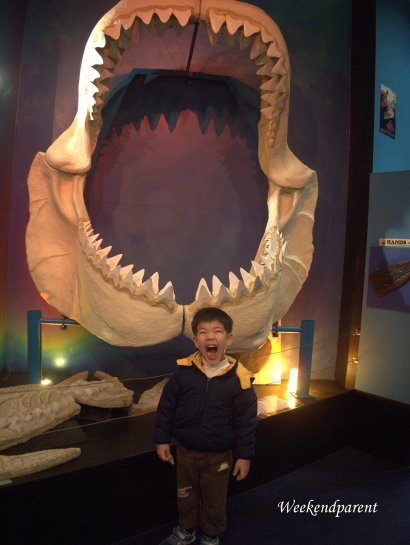 Yaaar!!!  I'm as scary as a dinosaur.  Posing in front of a megalodon shark jaw