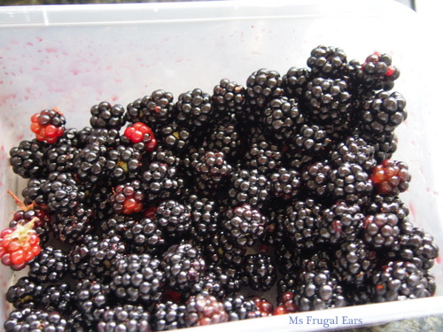 A box of collected blackberries
