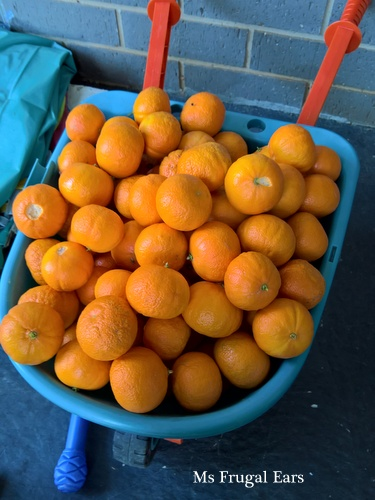 A toy wheelbarrow full of mandarins