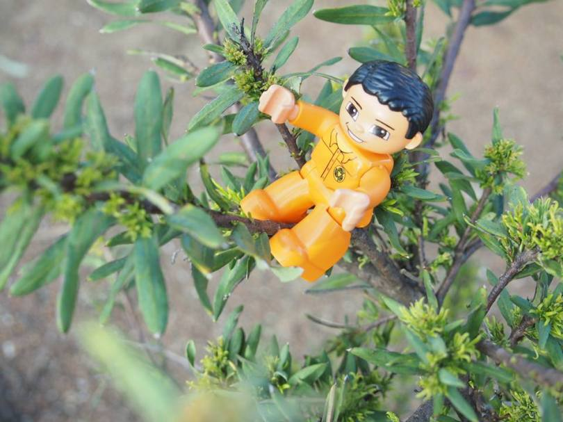 A little toy man on a tree