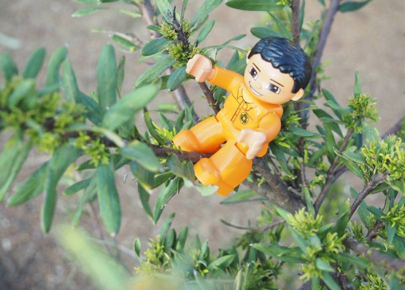 A little toy man on a tree